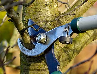 Tree Pruning - Add to the Beauty of Your Landscape