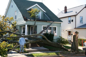 Why You Should Remove Your Dying Trees - Walt's Tree & Stump