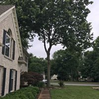 Tree at side of house